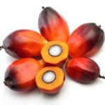 Alarma por el aceite de palma, ¿Mito o realidad?